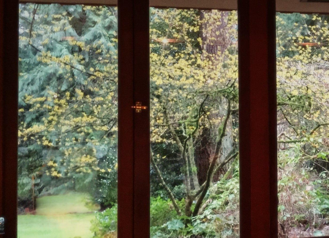Brandes House blossom view